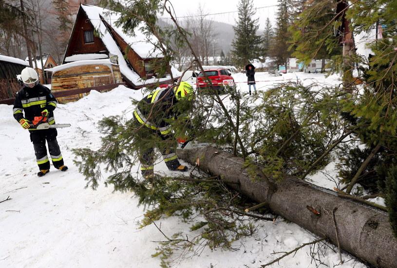 Wiatr łamał drzewa również w Zakopanem /Grzegorz Momot  (PAP) /PAP