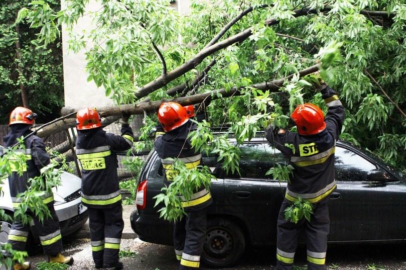 Wiatr powalił drzewa, zerwał linie energetyczne. /Wojciech Moskal /East News