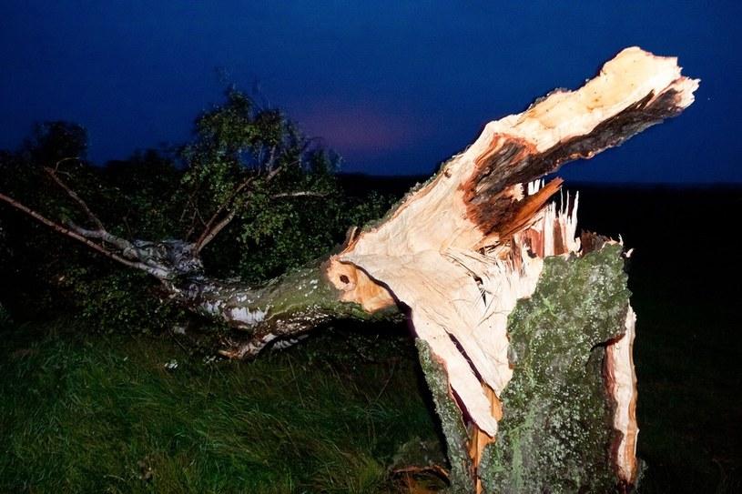 Wiatr powalił kilka drzew /Reporter