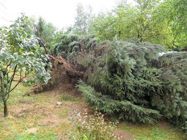 Wiatr powyrywał drzewa z korzeniami /Gorąca Linia/Marek /RMF FM