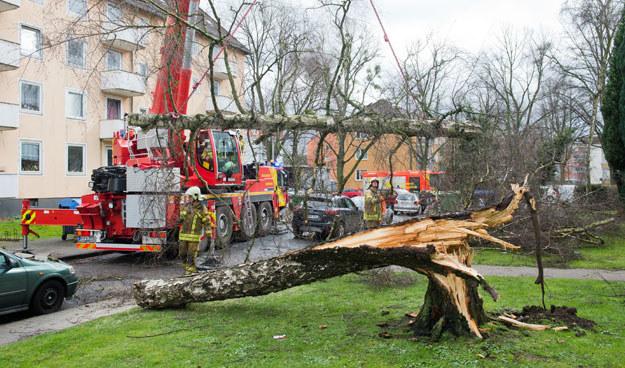 Wiatr w Niemczech uszkodził wiele domów i drzew fot. Julian Stratenschulte /AFP