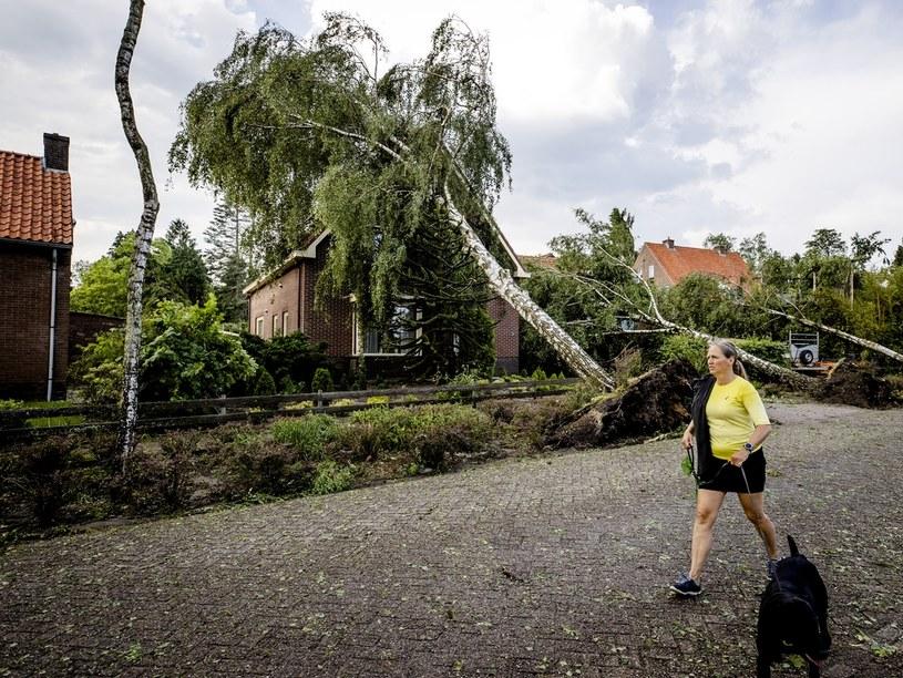 Wiatr wyrywał drzewa z korzeniami; na zdjęciu Utrecht – miasto w środkowej Holandii /AFP