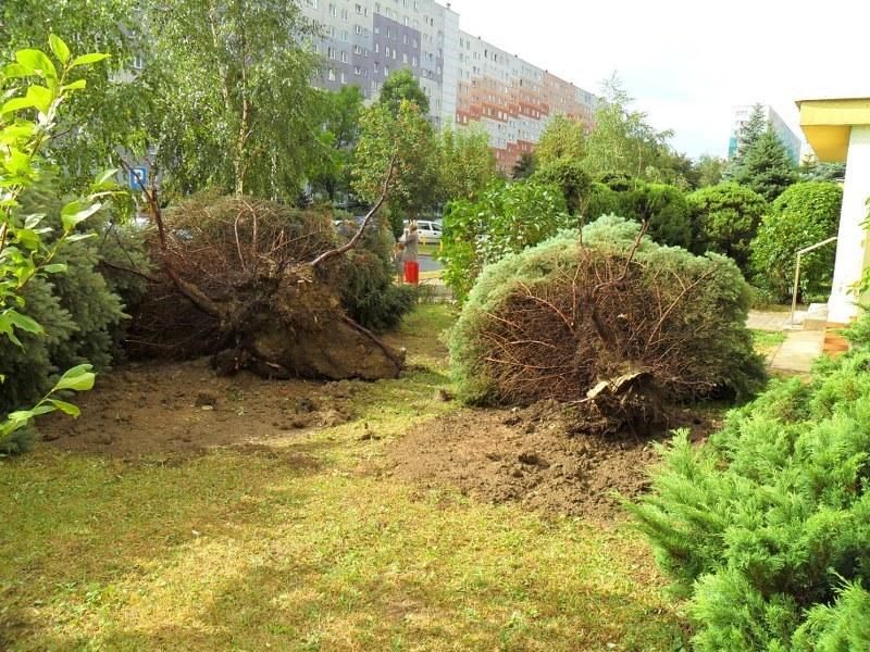 Wiatr wyrywał drzewa z korzeniami /Gorąca Linia RM FMf /