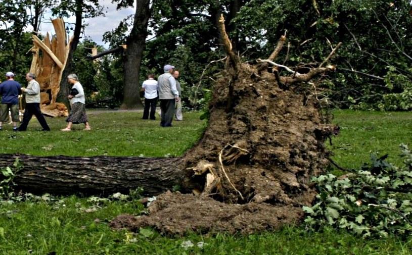 Wichura łamała drzewa /Małgorzata Hutnik /East News