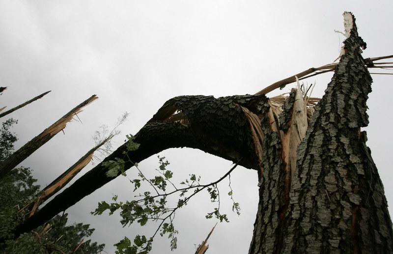 Wichura łamała drzewa /MAREK BARCZYŃSKI /East News