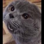Wideo z tym gadającym kotem ma ponad 2 miliony wyświetleń! Tak, on naprawdę mówi!