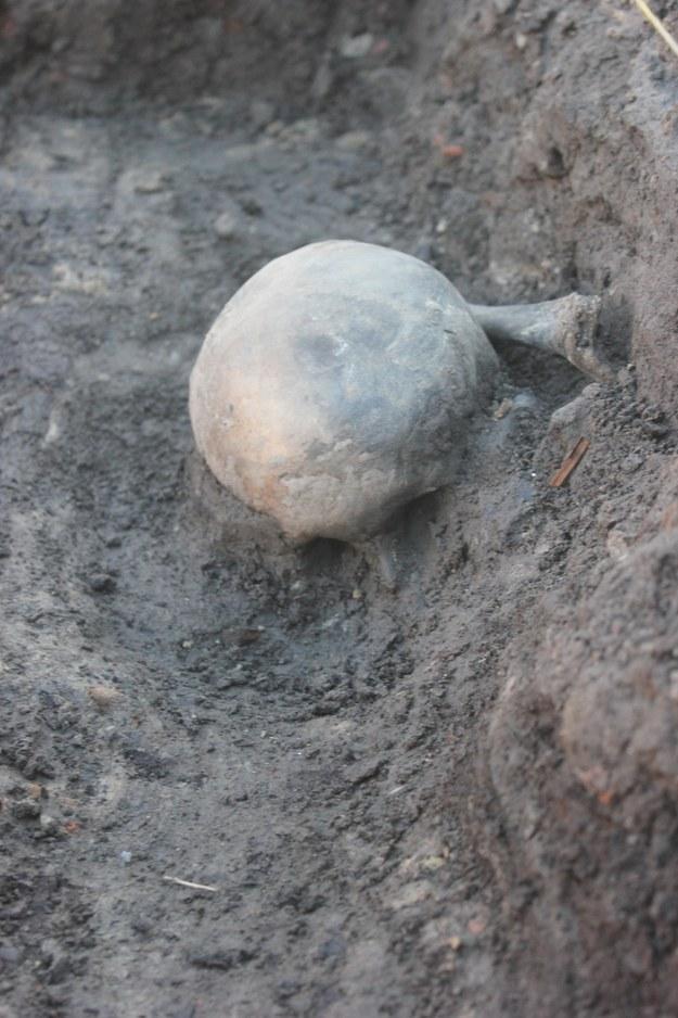Widok czaszki pochówku 1 na głębokości 1,2 m /Marcin Paternoga /Materiały prasowe