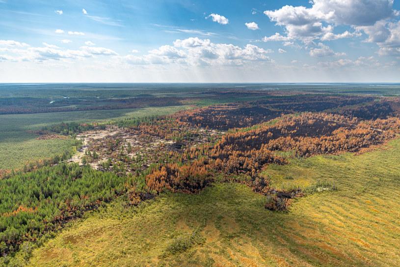 Widok na tereny strawione przez pożary w zachodniej Syberii /Denis Bushkovsky/TASS /Agencja FORUM