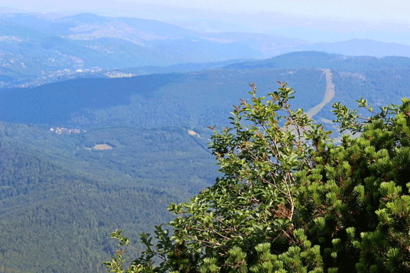 Widok z Babiej Góry /123RF/PICSEL