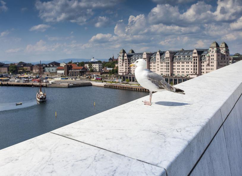 Widok z Opery w Oslo /123RF/PICSEL