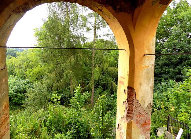 Widok z tarasu budynku mieszkalnego na… bujną zieleń /Dariusz Pietrucha /Odkrywca