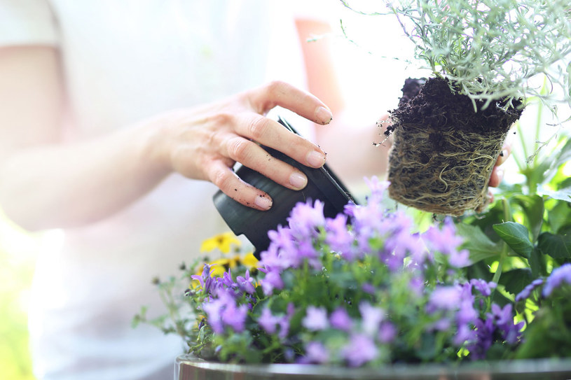 Większość bylin lubi słońce. Jeśli masz w ogrodzie sporo zacienionych zakątków, posadź: tojeść, bluszcz lub konwalie /123RF/PICSEL