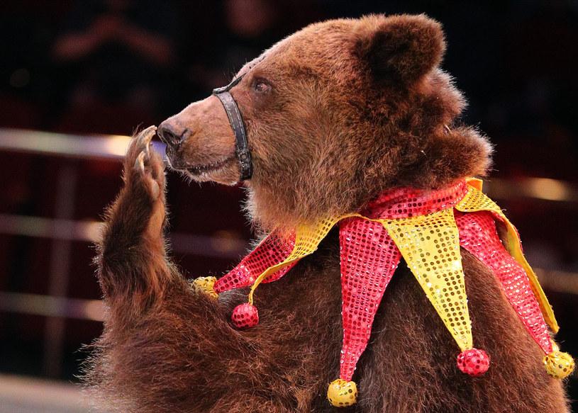 Większość Polaków chce zakazu występów zwierząt w cyrku /Vladimir Smirnov\TASS via Getty Images /Getty Images