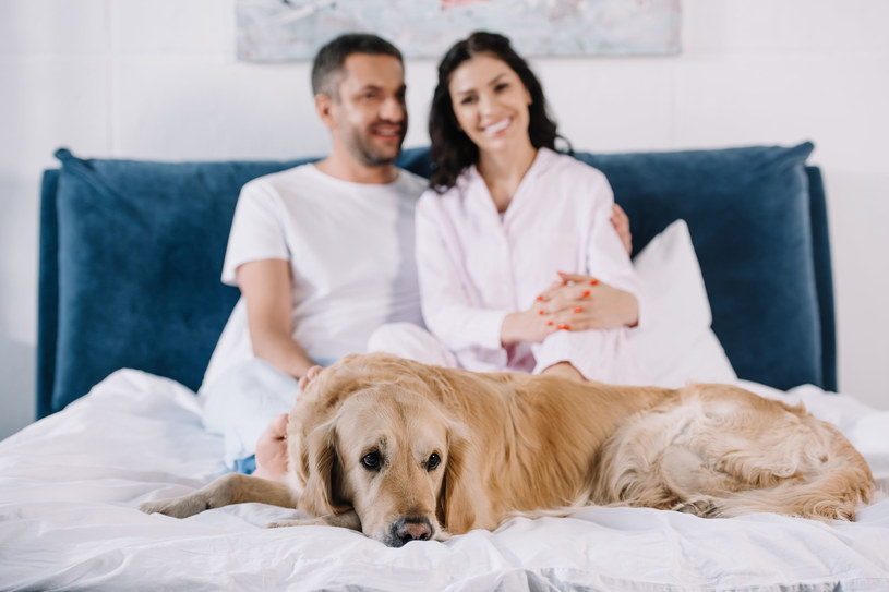 Większość respondentów biorących udział w badaniu przekonuje, że obecność zwierząt w sypialni nie przeszkadza w miłosnych igraszkach /123RF/PICSEL