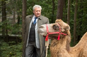 Wielbłąd na Sadybie! /fot  /Agencja W. Impact