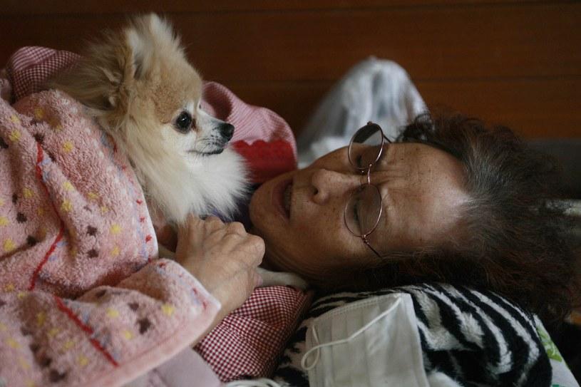 Wiele osób w Azji traktuje psy jak dzieci i z taką myślą je kupuje /Getty Images