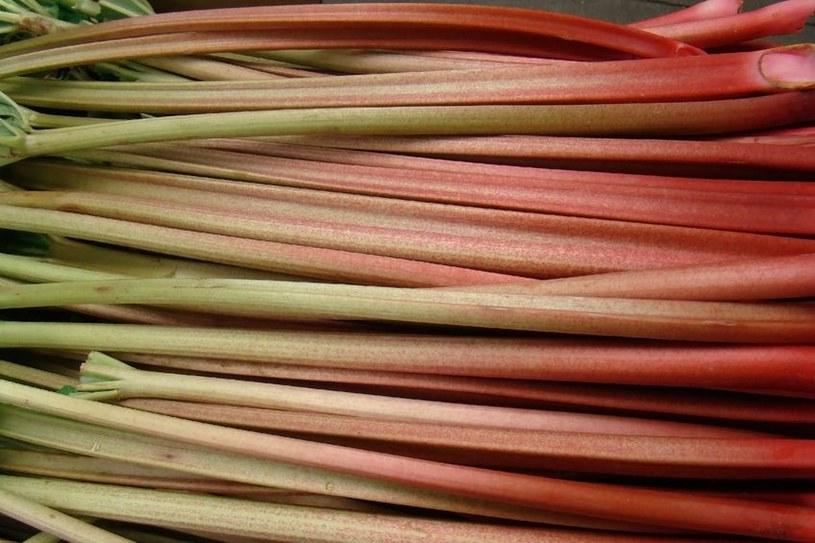 Wiele osób zastanawia się, czy rabarbar jest owocem czy warzywem /123RF/PICSEL