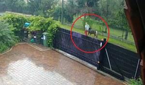 Wieliczka: Poszukiwany kucyk i sprawca jego kradzieży