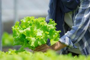 Wielka Brytania: Z powodu koronawirusa farmerzy nie mają pracowników sezonowych