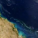 Wielka Rafa Koralowa na skraju zagłady