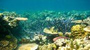 Wielka Rafa Koralowa - zanurkuj do podwodnego świata