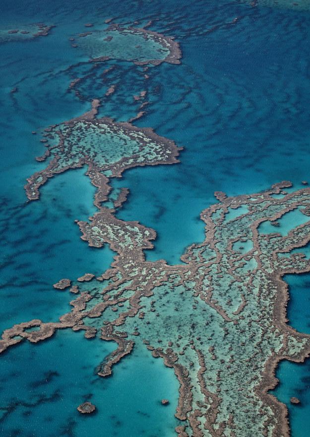Wielka Rafa Koralowa /Holger Leue /PAP/DPA