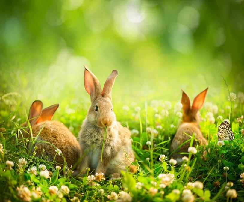 Wielkanoc symbolizuje życie /123RF/PICSEL