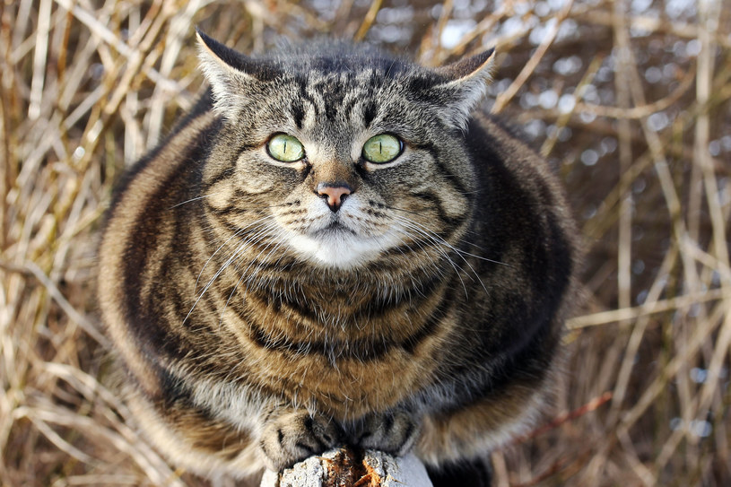 Wielki kot-mutant pojawia się w okolicy świąt Bożego Narodzenia /123RF/PICSEL