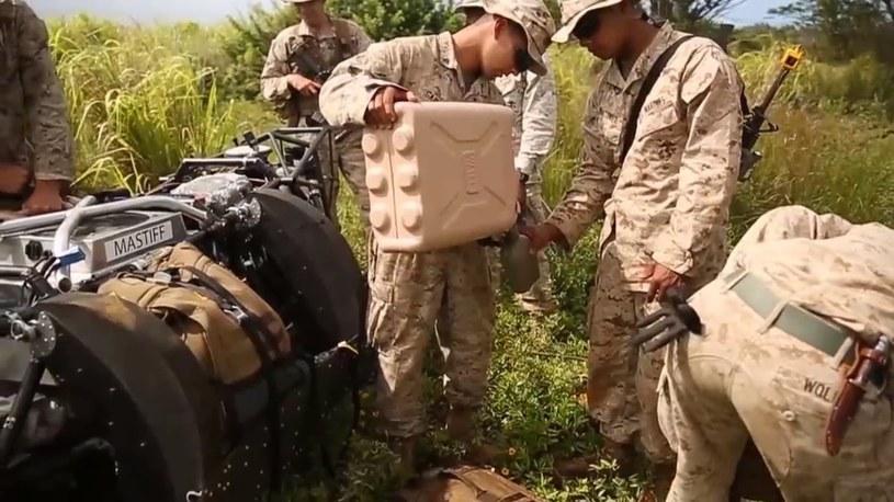 Wielki pies podczas manewrów wojskowych /East News