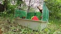 Wielki powrót małych wiewiórek