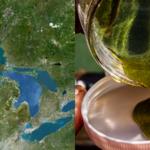 Wielkie Jeziora zmagają się z istną plagą! Straty liczone są w milionach