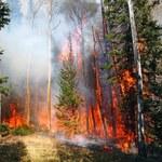 Wielkie zagrożenie dla polskich lasów