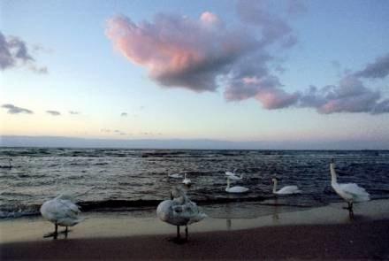 Wieloryb w Bałtyku? A jednak... / fot. P. Blawicki /RMF