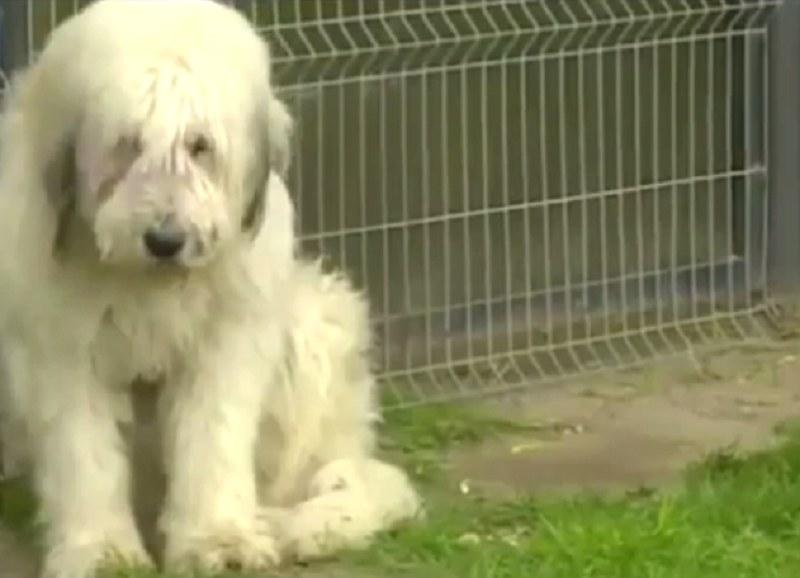 Wierność tego psa wzrusza do łez /YouTube