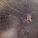 Wierzono w to od lat! Naukowcy obalili mit dotyczący pająków!