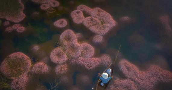 Wietnam: Algi zakwitły na różowo