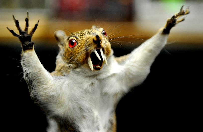 Wiewiórki, bażanty, jastrzębie w wielu domach, restauracjach lub hotelach wciąż budzą postrach, choć uważane są za ozdobę /Getty Images