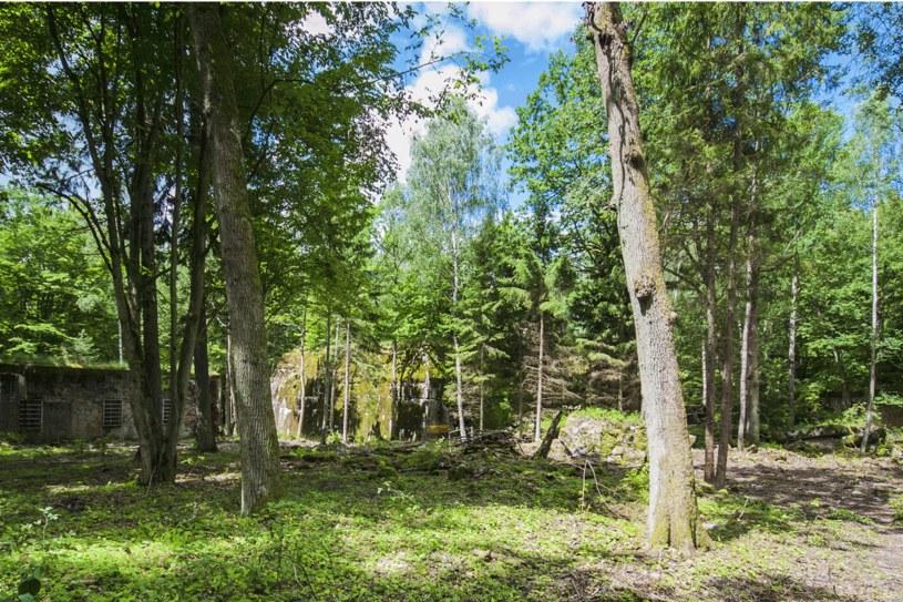 Wilczy Szaniec - w 1944r. mieszkało tu ponad 2000 osób. /123RF/PICSEL