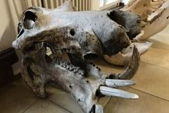 Willa pełna zwierzęcych czaszek i szkieletów