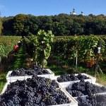 Wina z krakowskiej winnicy Srebrna Góra nagrodzone w Paryżu