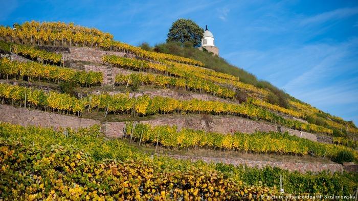 Winnica w Niemczech /picture-alliance/dpa/M. Skolimowska /Deutsche Welle