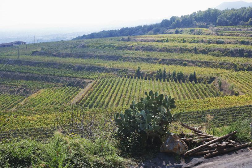 Winnica w Taorminie /123RF/PICSEL