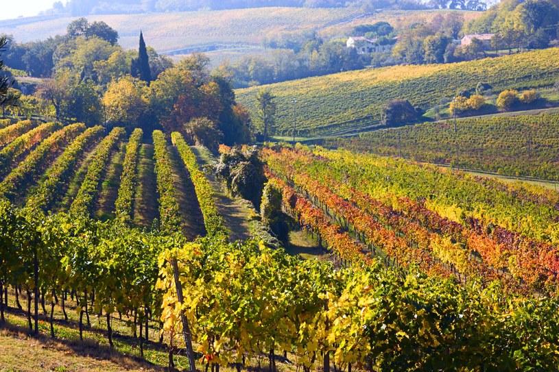 Winnice to nie tylko wino, to również piekne krajobrazy /123RF/PICSEL