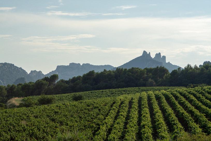 Winnice w departamencie Vaucluse /123RF/PICSEL