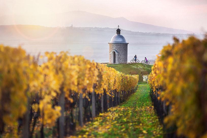 Winnice w regionie Palavy /fot. David Marvan /Styl.pl/materiały prasowe
