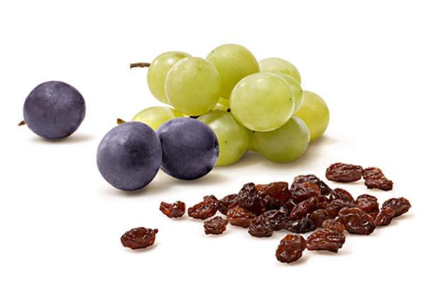 Winogrona i rodzynki trujące dla zwierząt /© Photogenica