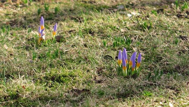 Wiosna coraz bliżej. Na początku marca będzie nawet 16 stopni!