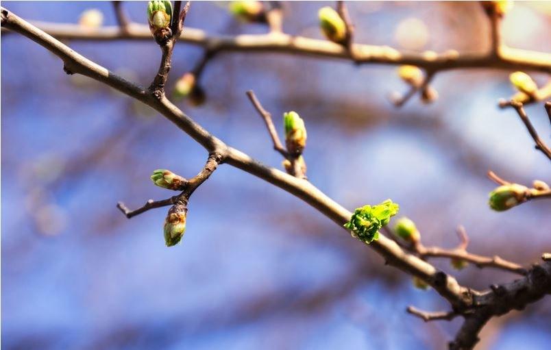 Wiosna coraz bliżej! Zdj. ilustracyjne /123RF/PICSEL
