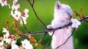 wiosna, mości Panie ;-)))