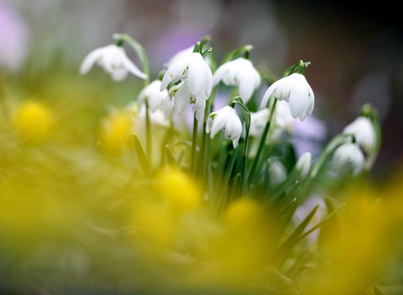 Wiosna się rozkręca /AFP